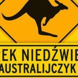 australijczyk-b-iext30485499-jpg-standa-jpg